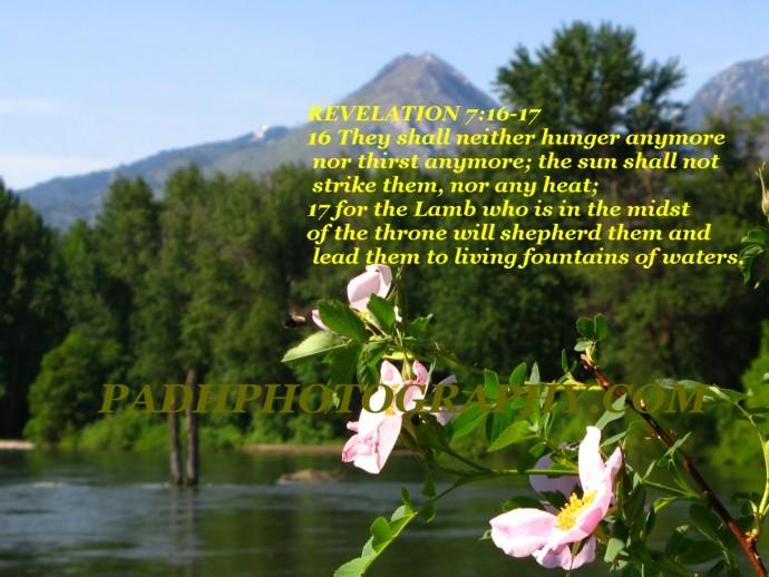 REVEALTION 7:16-17