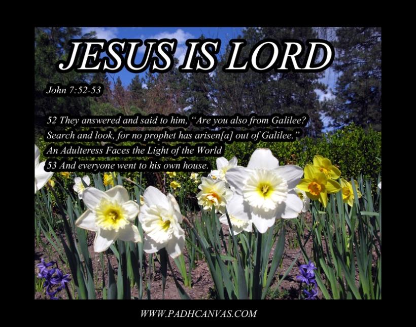 daffodil field 2008  2 copy