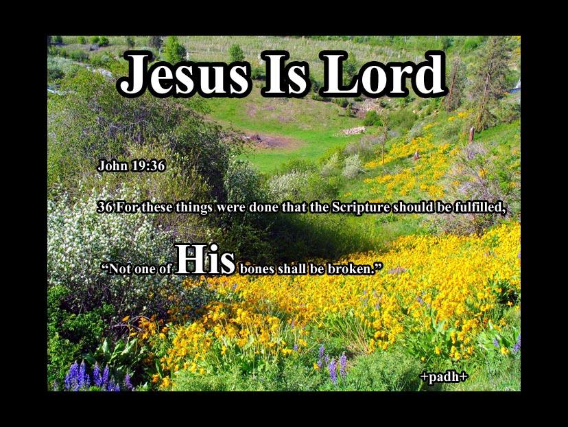 John 19: 36