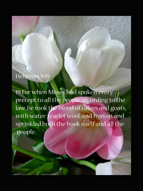 Hebrews 9 19