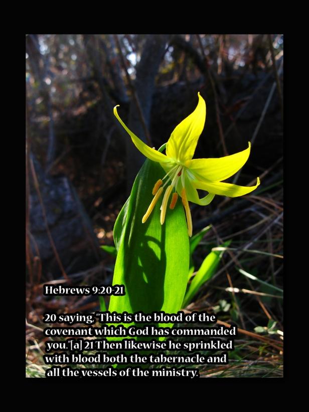 Hebrews 9 20 21